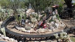Cholla Patch Funicular 1.JPG